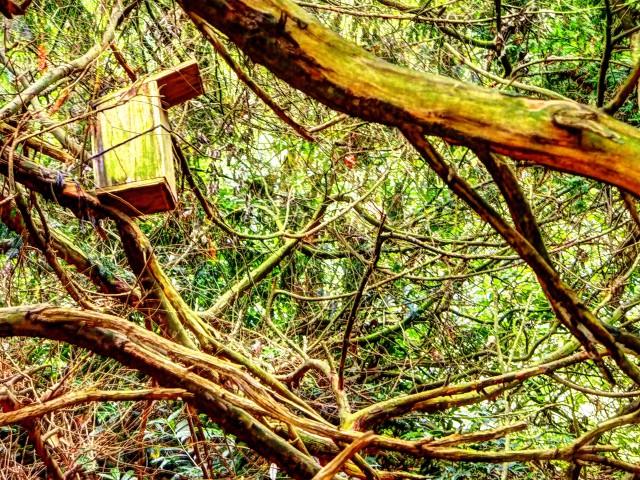 Foto eines Vogelhauses im Baumgeäst