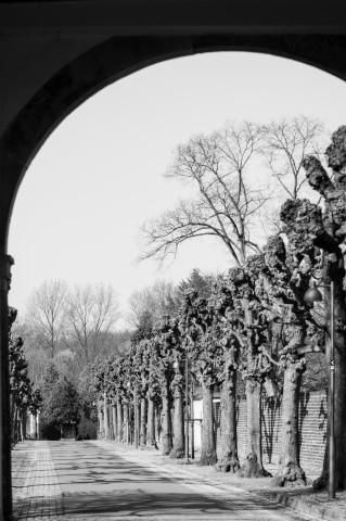 Schwarz/Weiß Bild, Baumallee durch einen Torbogen fotografiert